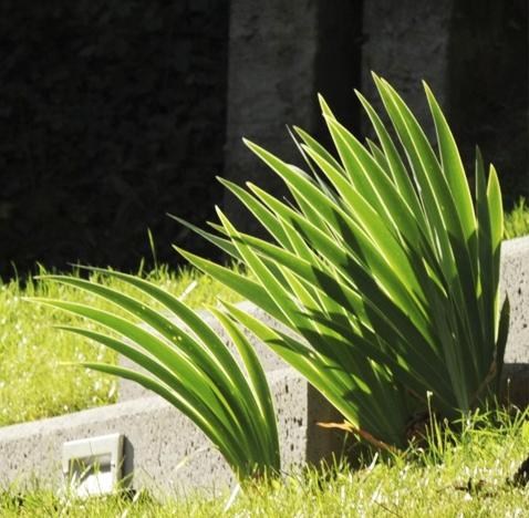 Rénovation d'un jardin de particulier – Saint Didier au Mont d'Or (69)