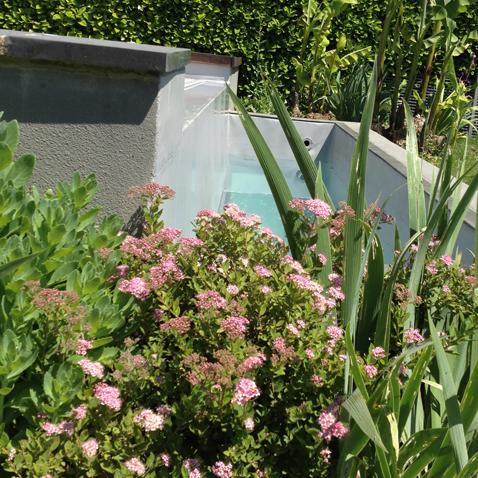 Jardin piscine paysagiste lyon4 atelier papyrus for Jardin lamartine