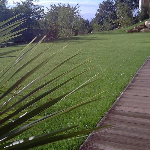 plantation autour d une piscine awesome terrasse bois teck de plantation tekabois diapo destin. Black Bedroom Furniture Sets. Home Design Ideas